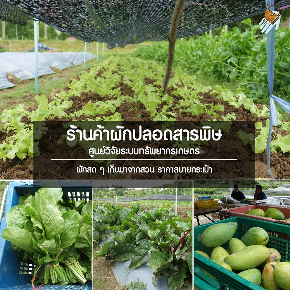 ผักปลอดสารพิษ , Vegetables , เกษตร, Fruit and vegetables, organic market, Vegetable gardens